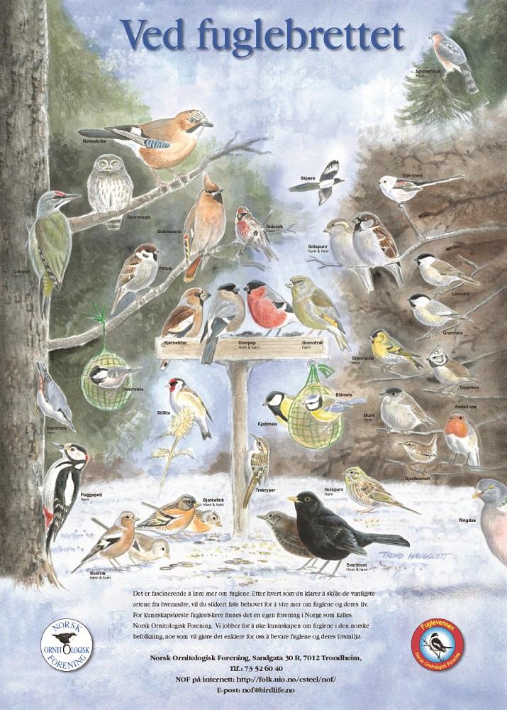 Vinterfuglplakat