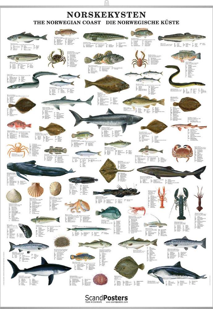 Norskekysten, fisk skalldyr og hval