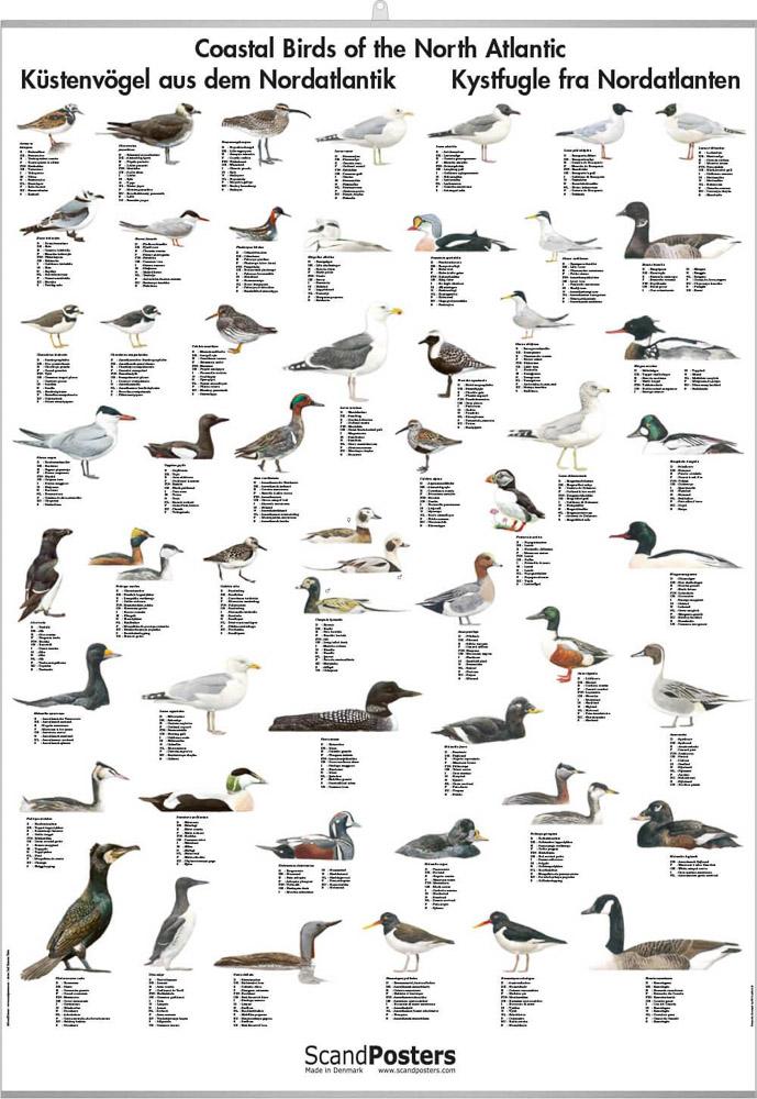 Kystfugler i Nordatlanteren