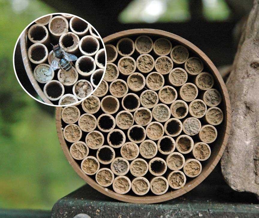 Humle- og biekasser til hagen fra Natur og Fritid.